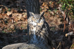 Owl at Maymont - Last photo taken with my Nikon D60